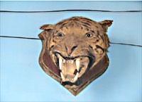 2_tiger_head